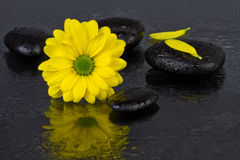 Flor del amarillo del concepto del balneario con las piedras del balneario Imágenes de archivo libres de regalías