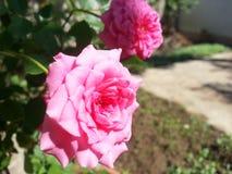 Flor del amor Imagen de archivo libre de regalías