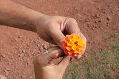 Flor del amor fotografía de archivo libre de regalías