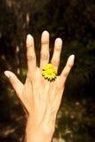 Flor del anillo Fotografía de archivo libre de regalías