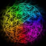 Flor del arco iris de la vida con aureola