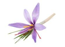 Flor del azafrán Fotografía de archivo libre de regalías