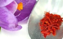 Flor del azafrán y del azafrán Fotografía de archivo libre de regalías