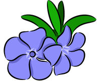 Flor del bígaro Fotografía de archivo