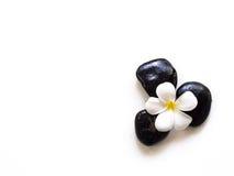 Flor del balneario del plumeria del Frangipani con las piedras del masaje Fotos de archivo libres de regalías
