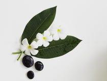 Flor del balneario del plumeria del Frangipani con las piedras del masaje Foto de archivo
