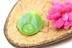 Flor del balneario en cáscara del coco Imagen de archivo