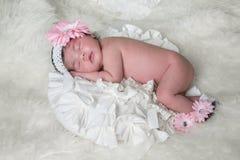Flor del bebé Foto de archivo