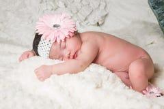 Flor del bebé Imagen de archivo libre de regalías