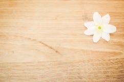 Flor del blanco de la memorización de la anémona Fotografía de archivo libre de regalías