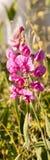 Flor del borde de la carretera Imágenes de archivo libres de regalías
