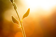 Flor del brote en la iluminación Fotos de archivo libres de regalías