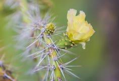 Flor del cactus Fotos de archivo