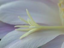 Flor del cactus Fotografía de archivo libre de regalías