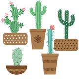 Flor del cactus en los potes para las flores y las plantas Cactus brillantes, hojas del ?loe, flora tropical de los cactus de las ilustración del vector