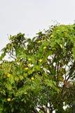 Flor del calabacín imagen de archivo libre de regalías