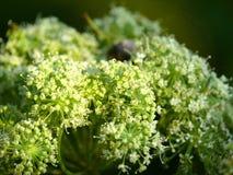 Flor del campo. Verano. Día. Fotos de archivo libres de regalías