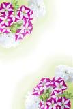Flor del capítulo de flores Imágenes de archivo libres de regalías