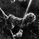 Flor del carro Fotografía de archivo