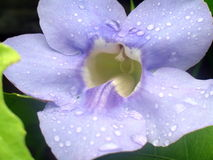 Flor del cielo azul imágenes de archivo libres de regalías