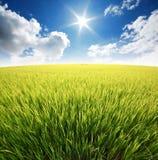 Cielo azul de la hierba verde Foto de archivo