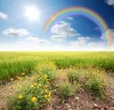 Cielo azul de la hierba verde Imágenes de archivo libres de regalías