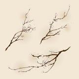 Flor del ciruelo con la línea diseño Fotografía de archivo