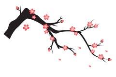 Flor del ciruelo en primavera Foto de archivo