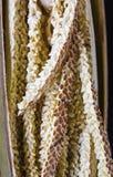 Flor del coco Fotos de archivo