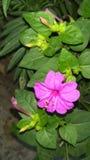 Flor del color Foto de archivo