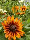 Flor 1 del color oscuro Imagenes de archivo