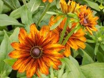 Flor 5 del color oscuro Fotos de archivo