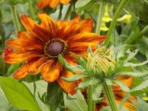 Flor 9 del color oscuro Fotos de archivo libres de regalías