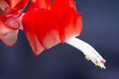 Flor del contraluz Foto de archivo libre de regalías