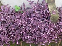 Flor del corazón púrpura de la élite Fotografía de archivo libre de regalías