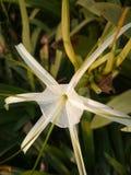 Flor del día imágenes de archivo libres de regalías