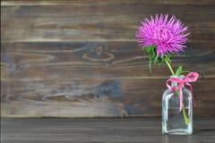 Flor del día de madres en una botella Imagen de archivo libre de regalías