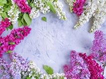 Flor del flor de la lila en estacional hermoso del marco romántico concreto del fondo imagen de archivo libre de regalías