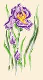 Flor del diafragma ilustración del vector
