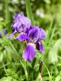 Flor del diafragma Foto de archivo libre de regalías