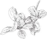 Flor del dibujo de la mano Imagenes de archivo