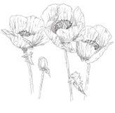 Flor del dibujo de la mano