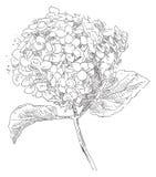Flor del dibujo de la mano Fotografía de archivo