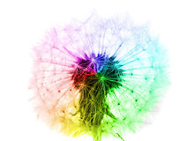 Flor del diente de león en los colores del arco iris aislados Imagen de archivo