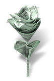 Flor del dinero Fotografía de archivo