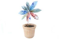 Flor del dinero en un pote Fotografía de archivo