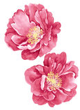 Flor del ejemplo de la acuarela Imagen de archivo