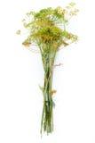 Flor del eneldo Fotos de archivo