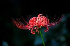 Flor del equinoccio imagen de archivo