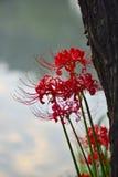 Flor del equinoccio foto de archivo libre de regalías
